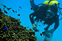 Diver looking at a coral reef
